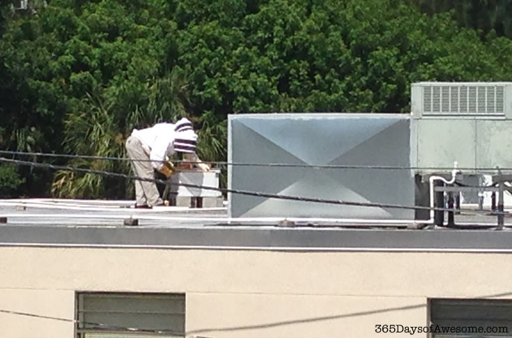 Urban roof top bee keepers. How awesome is that? Read more about 7 Ways to Help Save the Bees.